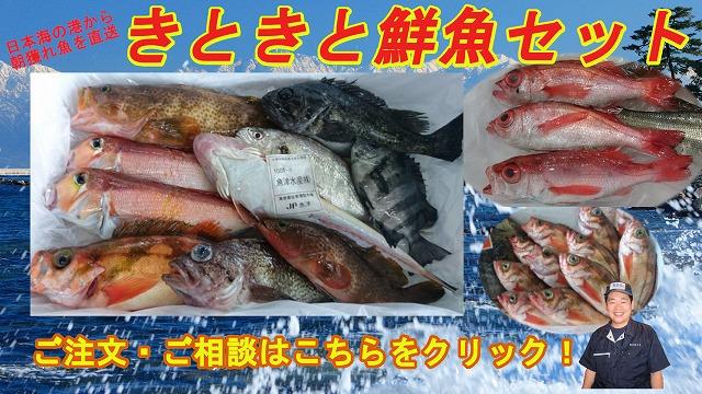 きときと鮮魚セット