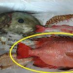 北陸の海に泳いでいないのに金目鯛(キンメダイ)製品が得意な理由。