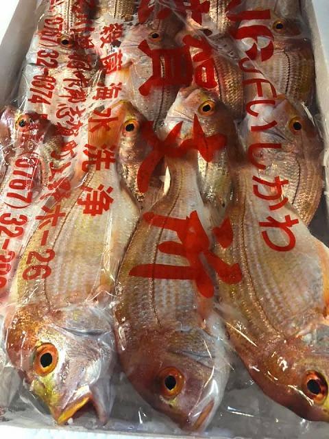 石川県産のレンコ鯛