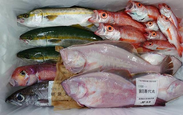 底引き漁解禁の