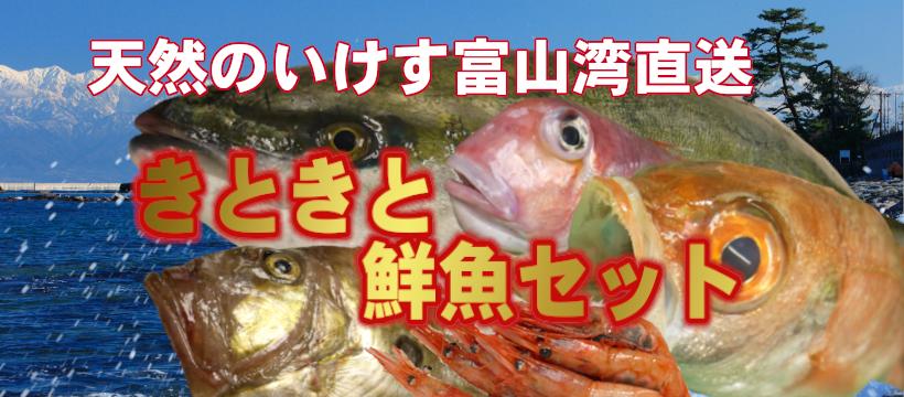 天然のいけす富山湾直送 きときと鮮魚セット