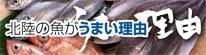 北陸の魚がうまい理由