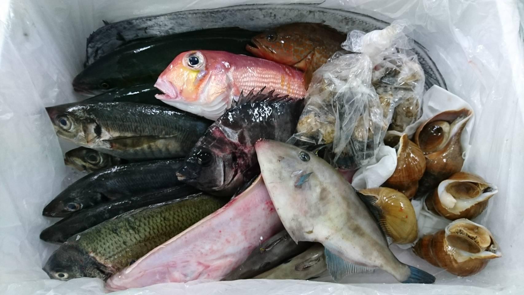 きときと鮮魚セット出荷例その2