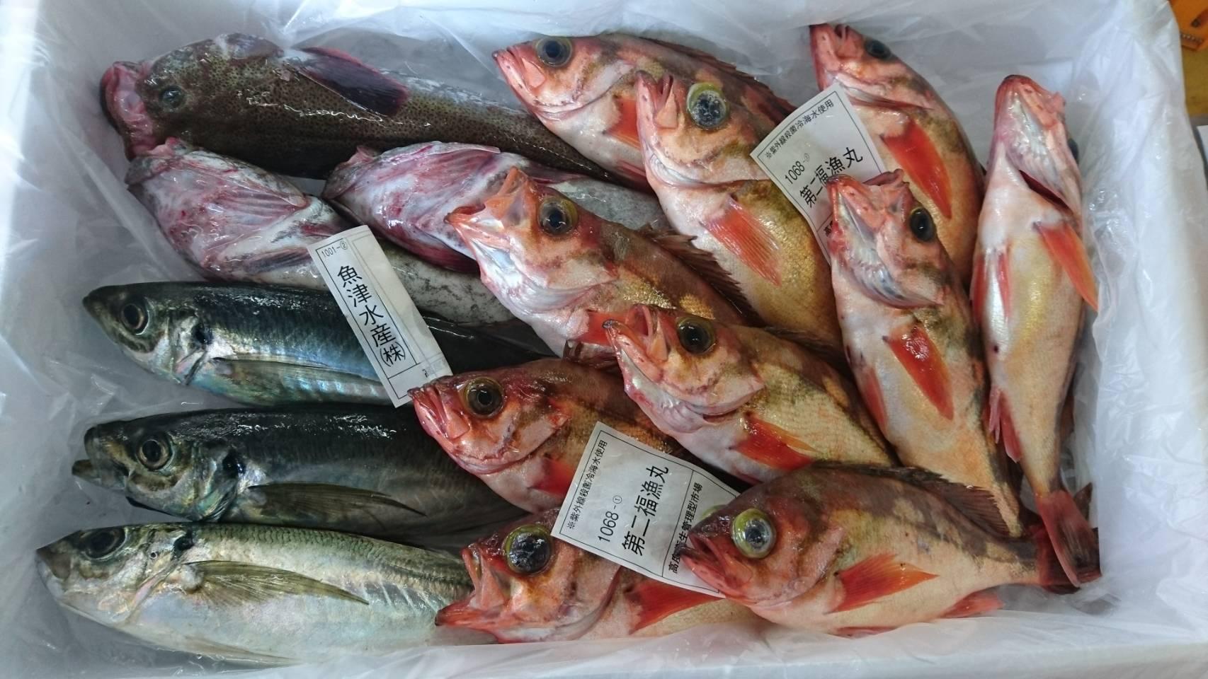 きときと鮮魚セット出荷例