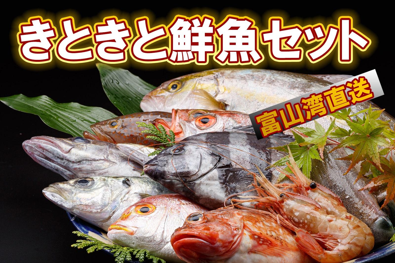 産直鮮魚きときと丸のきときと鮮魚セット