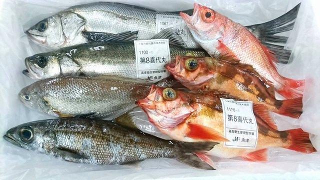 富山の魚介類