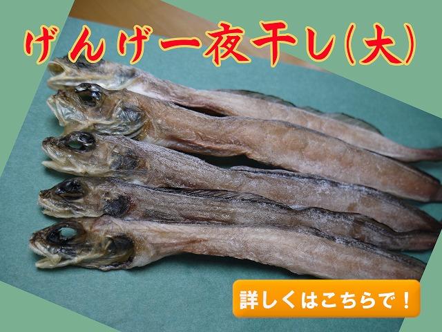 げんげ(幻魚/水魚)一夜干し 大